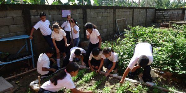 Huerto Urbano como crear un proyecto escolar de huerto