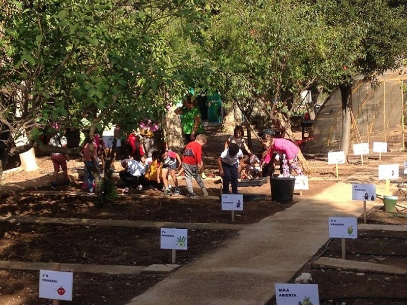 Huerto Urbano como crear un proyecto escolar de huerto I