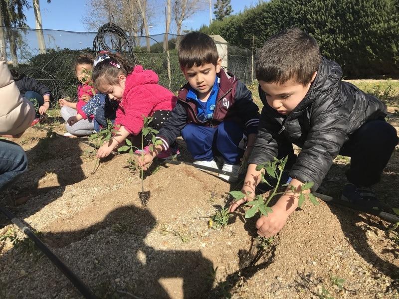 Huerto Urbano como crear un proyecto escolar de huerto II
